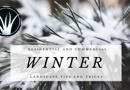 Winter Landscaping tips for Commercial and Residential Properties