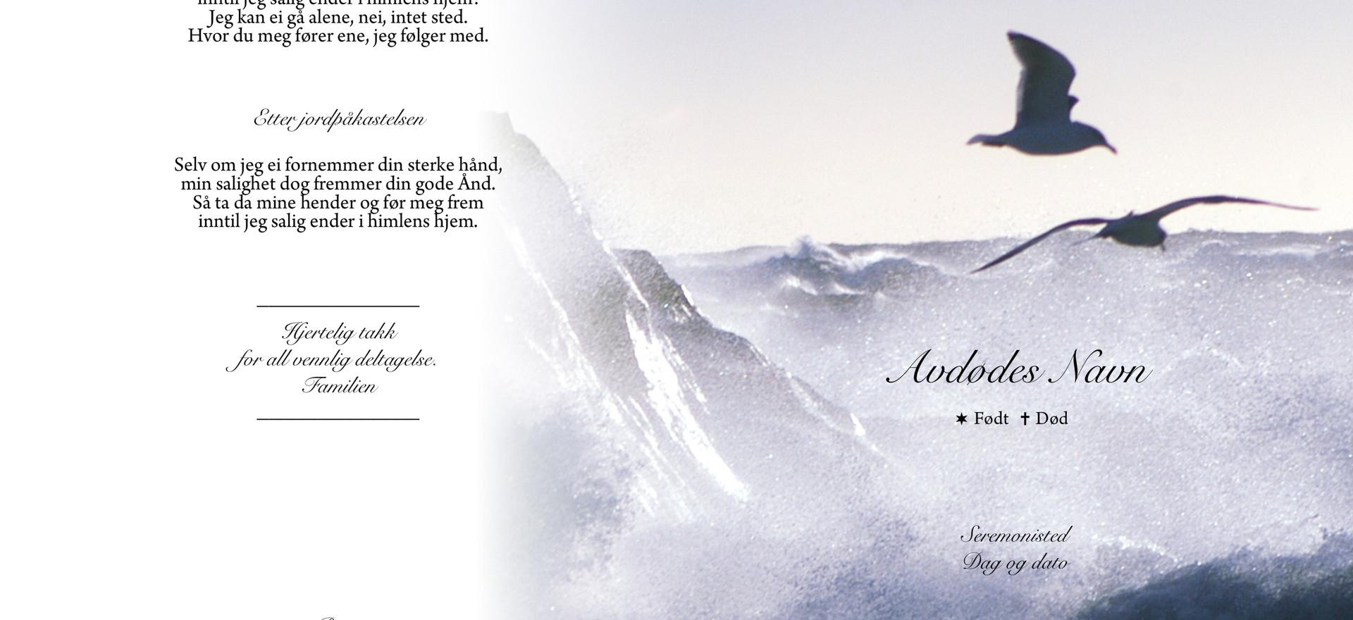 2065_Måker_og_havsprøyt