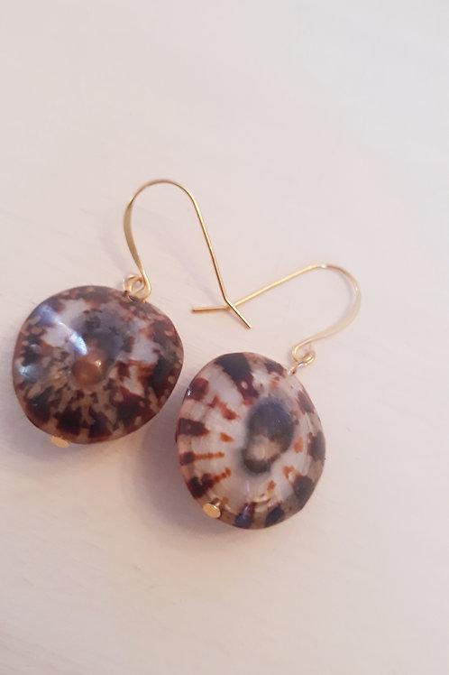 """""""Opihi"""" Shell Earrings"""