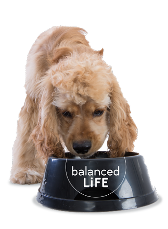 BalancedLife_Dog.png
