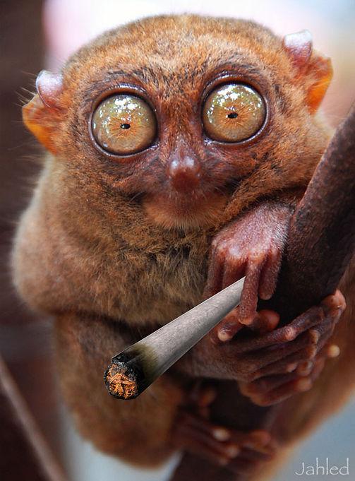 stoned_jahled.jpg