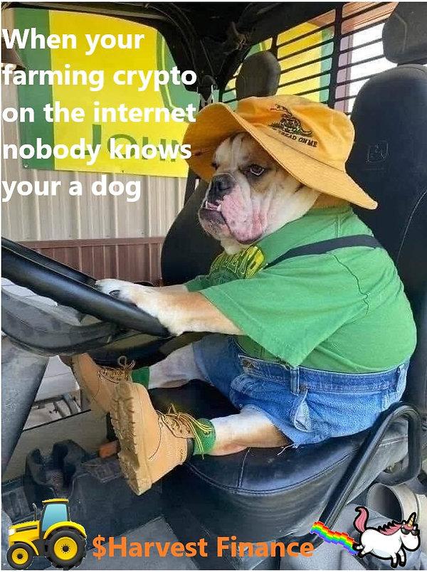 dog farmer.jpg