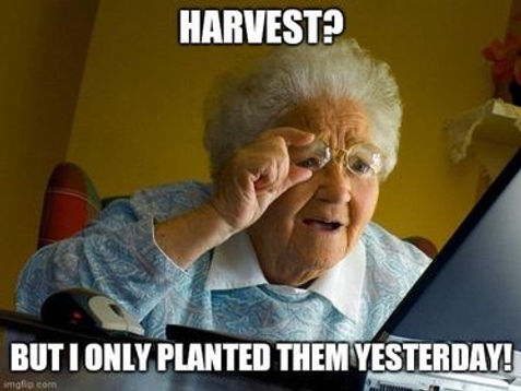 harvest now.jpg