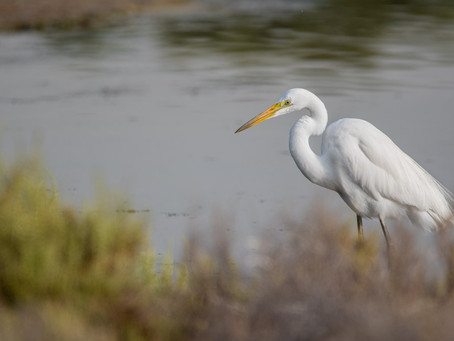 Bird Watching in Dubai?