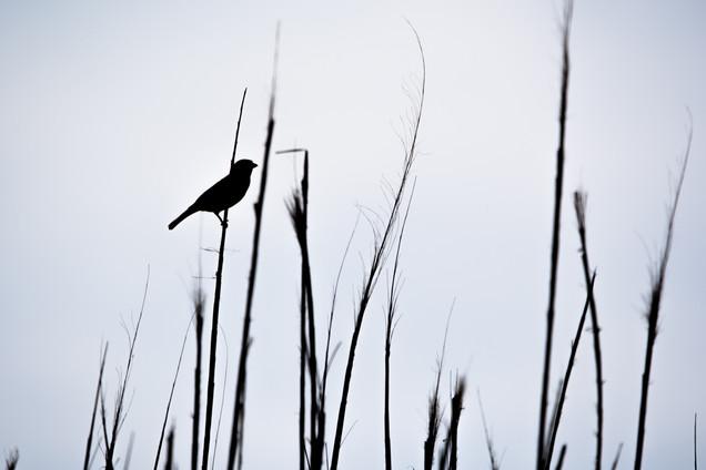 Sparrow in Shadow