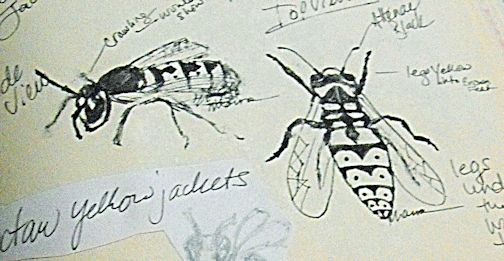Sketches of Yellowjackets