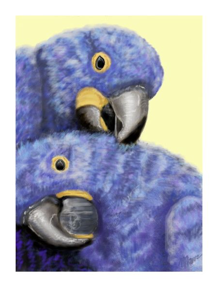 Parrots in Color