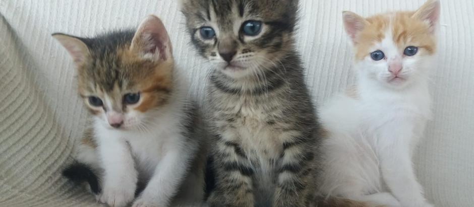 Toxoplasmosis... ¡Estoy embarazada!¿Mato al gato?