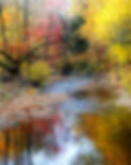 nature3.jpg