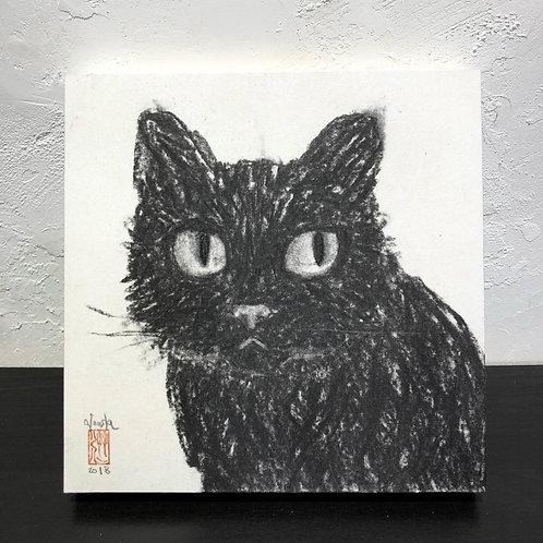 neco (cat) ~S0_drawing2678002~