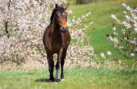 Reiterhof Teicha Pferdekalender 2021