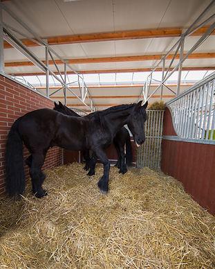 Reiterhof Teicha AQ5A3027.jpg