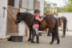 Ponyclub_web_AQ5A2623.jpg