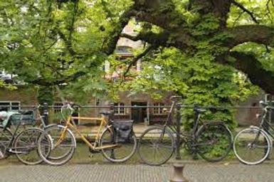 Bikes in Amsterdam.jpeg