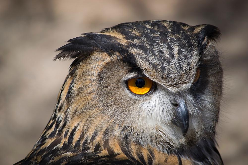 Night Owl Massage woodland hills CA