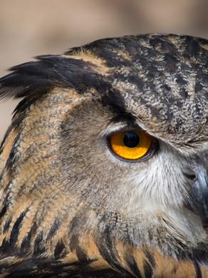 Owl Medicine ~ Crone Wisdom