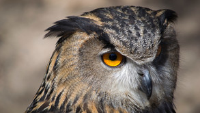 The Night Owl News Notes: 06/22/2021