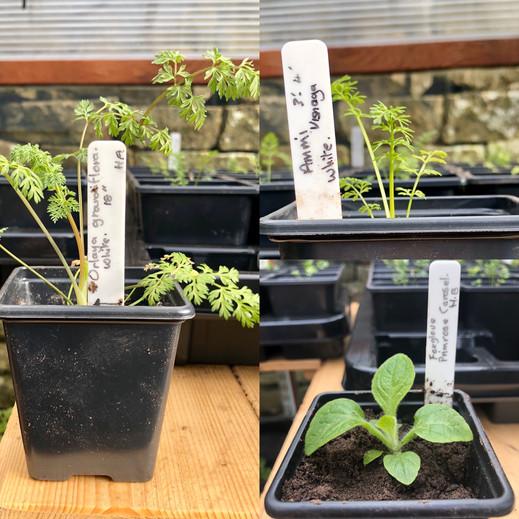 Mid March Seedlings.JPG