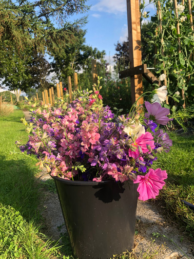 1st August 19 bucket of Larkspur & Cosmo