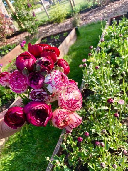 23rd May 2019 Ranunculus.jpg