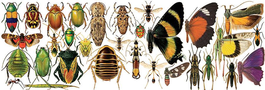 lots-of-bugs.jpg