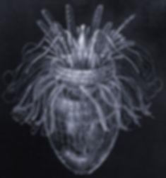 Pliciloricus_enigmatus.jpg
