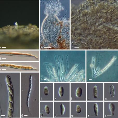 Marine fungi - why not?