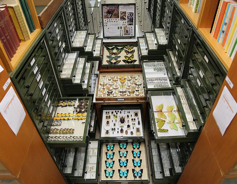 ANIC Collection Lep Hall.jpg