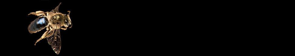 key strip.jpg