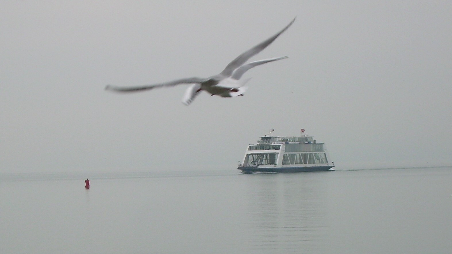 Bodensee - Nebelimpression 2