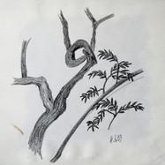 Baumskizze 6