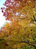Wandlungen_Aussicht_Bäume