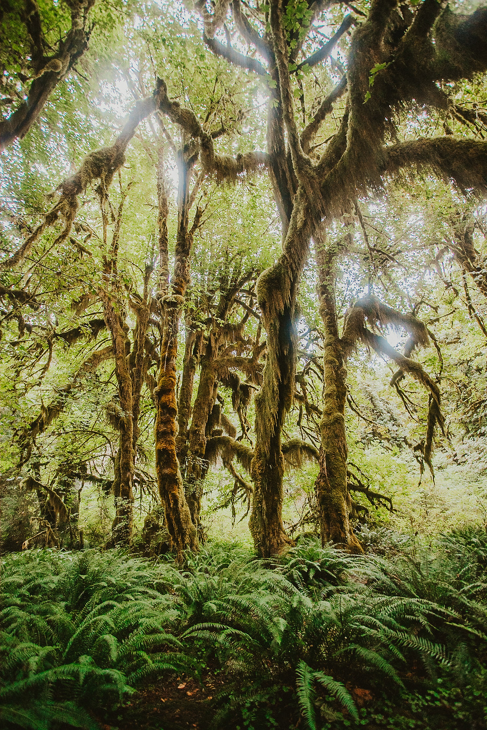 Hoh Rainforest - Olympic Peninsula