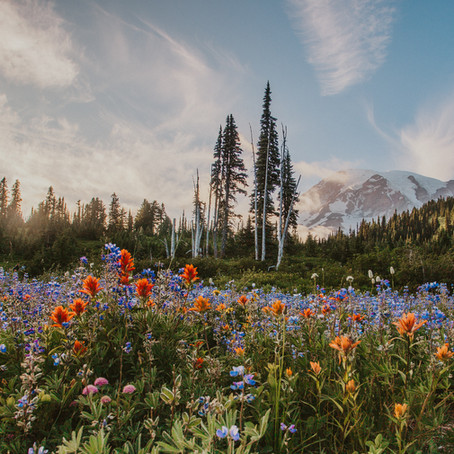 The Science of Leave No Trace