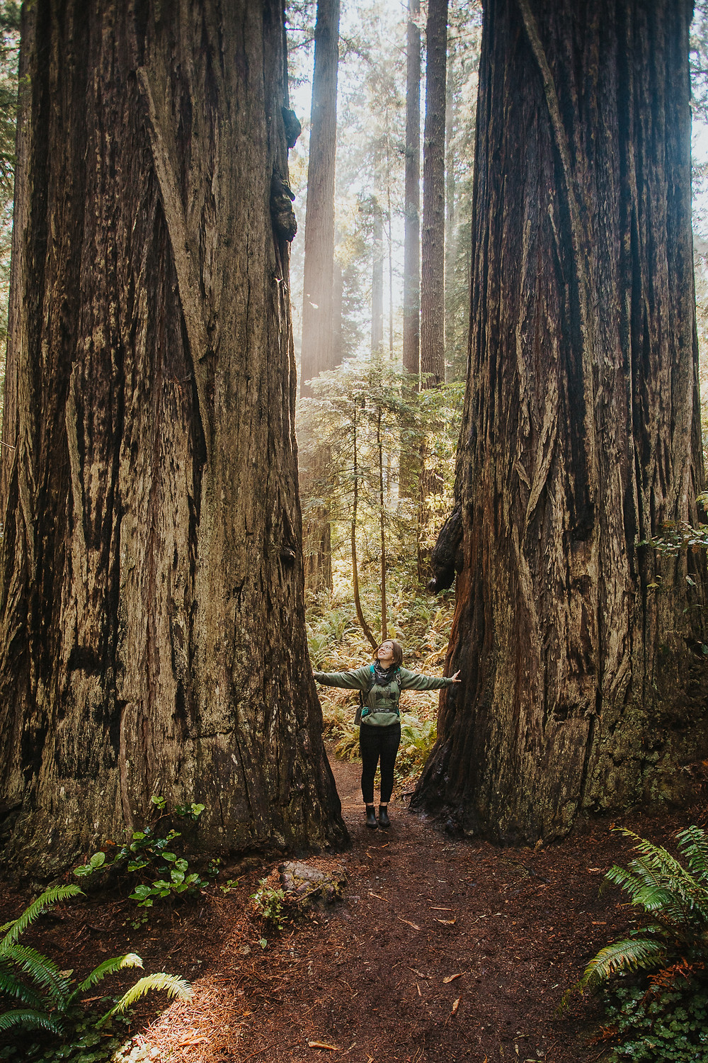 Standing Between Redwood Trees