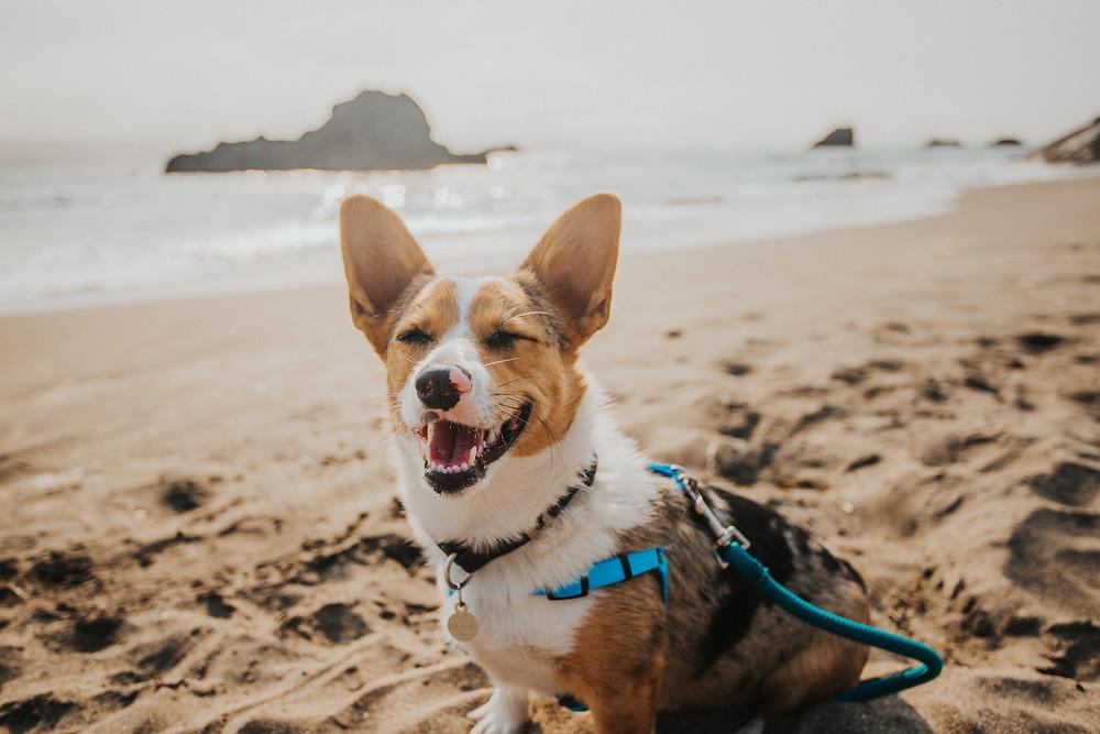 Dog Friendly Beach
