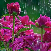 Floral Waters