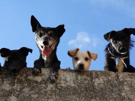 Söker du hundvakt?