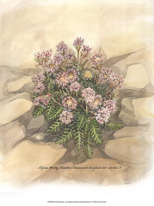 Alpine Botanicals - Alpine Dusty Maiden