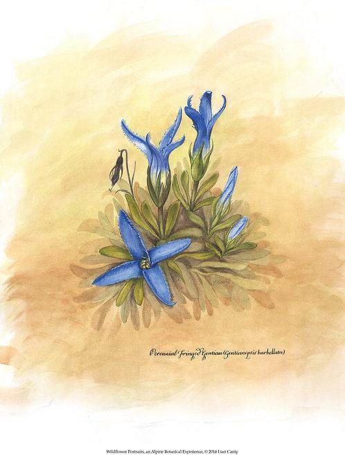 Alpine Botanicals - Perennial Fringed Gentian