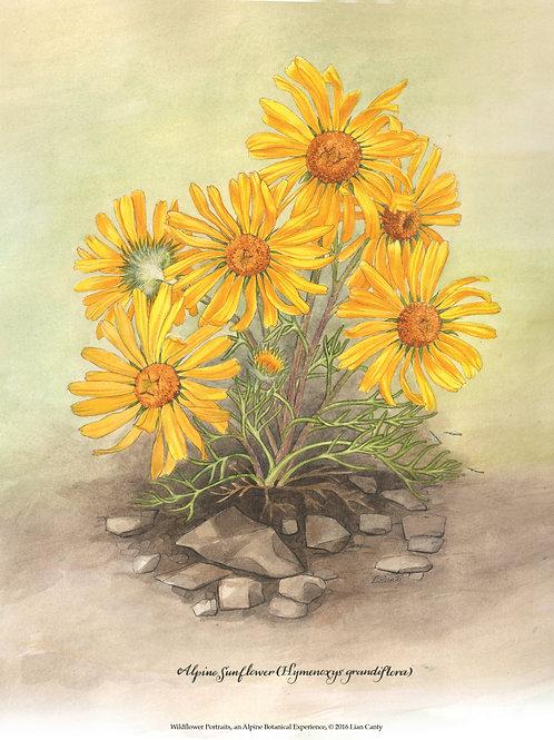 Alpine Botanicals - Alpine Sunflower