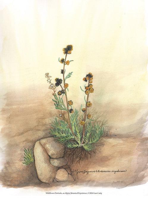 Alpine Botanicals - Boreal Sage