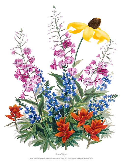Wildflower Botanical Print - Fireweed Bouquet