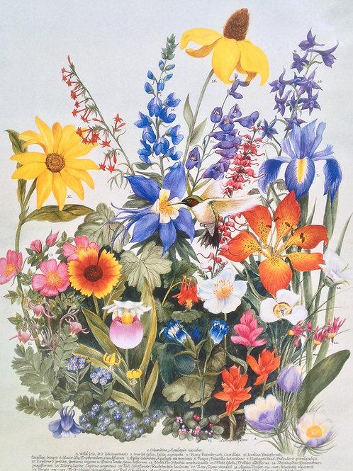 Wildflower Botanicals - Wildflower Medley Poster