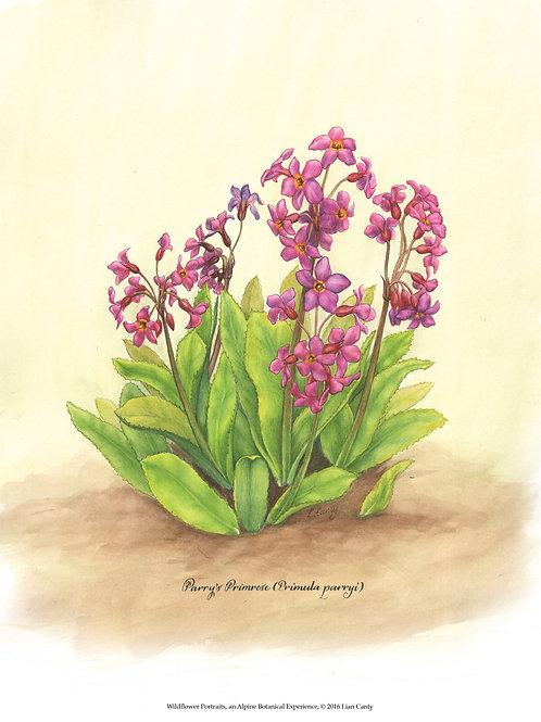 Alpine Botanicals - Parry's Primrose