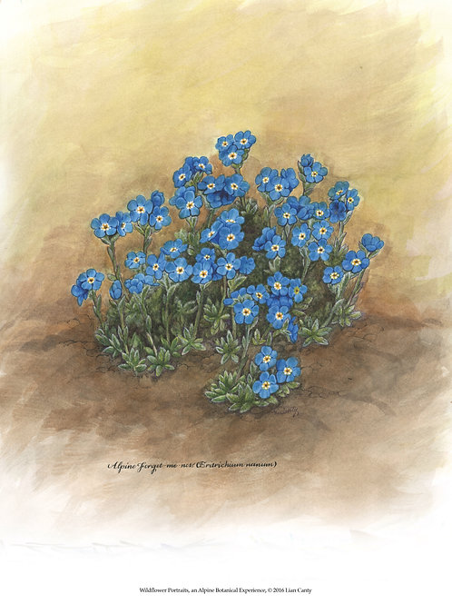 Alpine Botanicals - Forget-me-nots