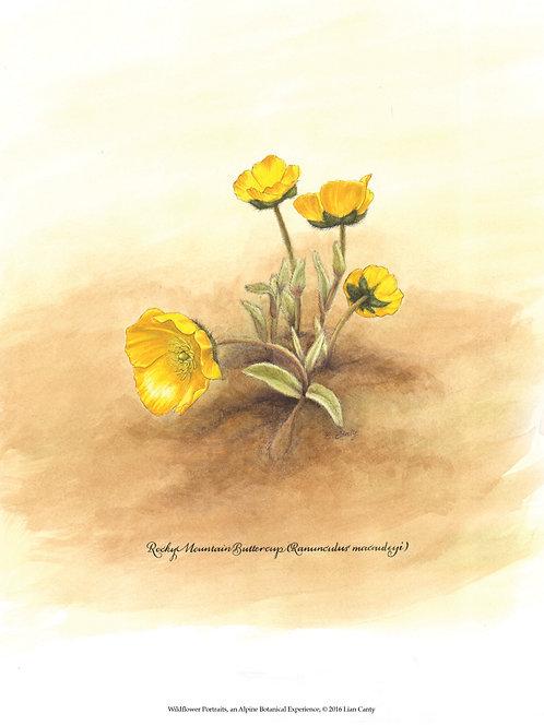 Alpine Botanicals - Rocky Mountain Buttercup