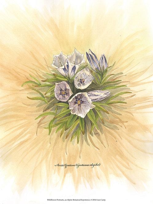 Alpine Botanicals - Arctic Gentian