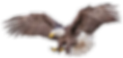 Eagle Icon.png