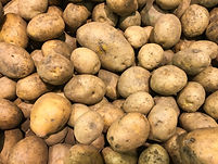 Fresh organic potato stand out among man